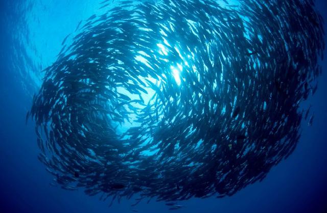 pesce-dal-basso
